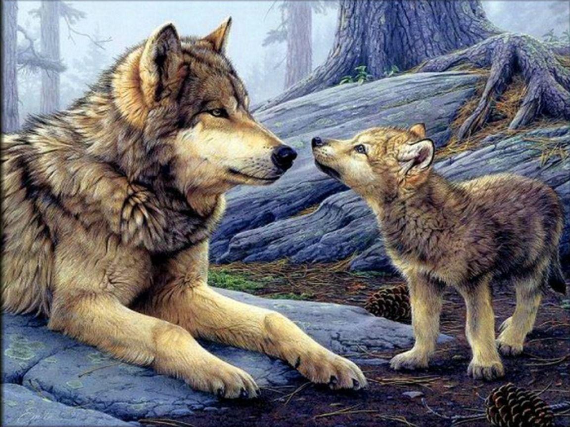 Font Ecran Loup Wolf